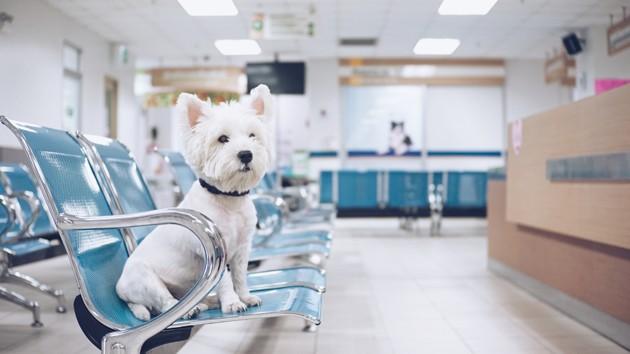chien à la clinique vétérinaire