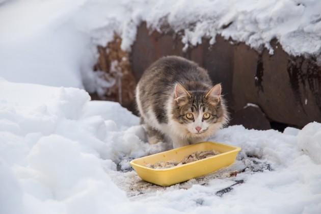 chat qui mange en hiver