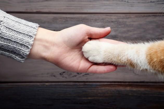 Mon chien a un cancer : comment réagir ?
