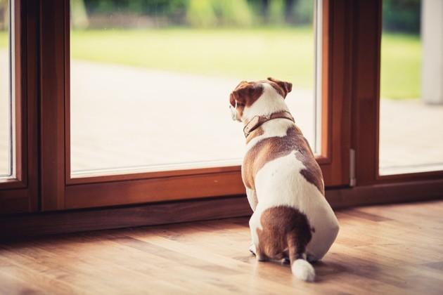 Coronavirus – Covid-19 : le guide complet pour votre chien et chat en période de confinement (sorties, vétérinaires, astuces, risques, activités...)