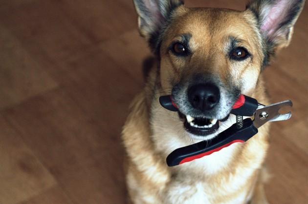 Covid-19 : voici comment toiletter votre chien vous-même pendant le confinement !
