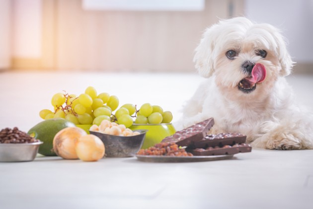 chien qui vole du chocolat à Noël