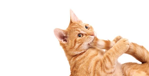 Mon chat se mord la queue : pourquoi, et comment l'aider ?