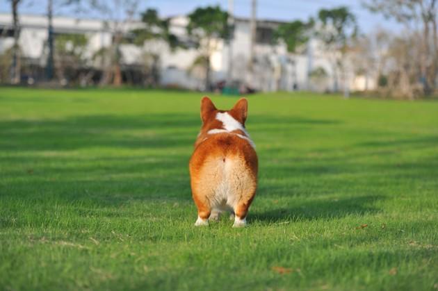 Mon chien a des gaz : pourquoi et que faire ?