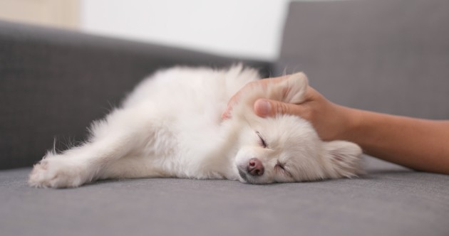 chien caresses