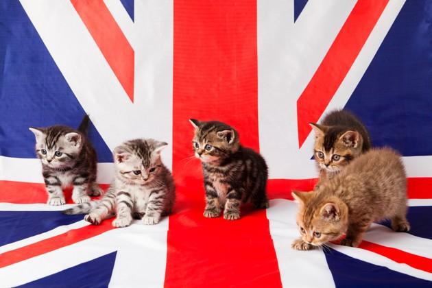 Comment voyager avec son chien, chat ou furet au Royaume-Uni après le Brexit ?