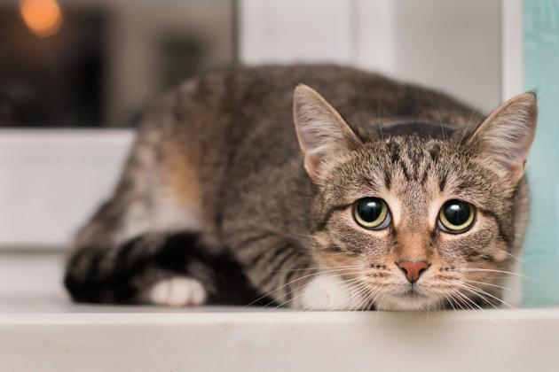La dépression chez le chat : comment se manifeste-t-elle, comment la prévenir ?