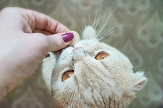 Probiotiques pour chat : mon animal en a-t-il besoin ?