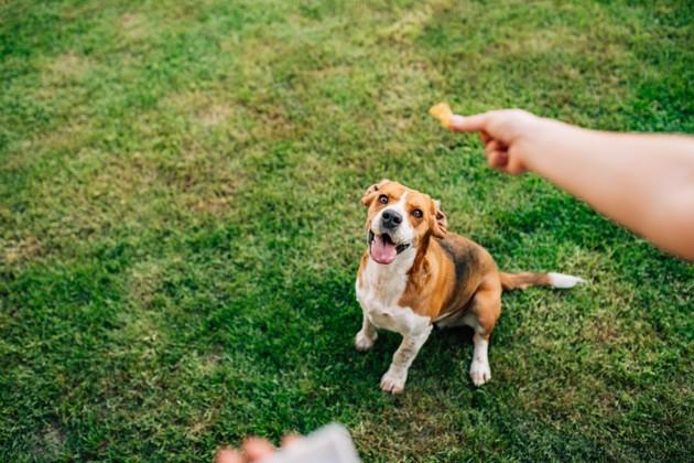 Renforcement positif : une méthode d'éducation canine qui favorise le bien-être animal