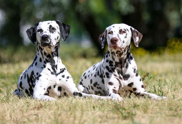 Voici le nom de chien Disney le plus donné aux Etats-Unis (et plein d'autres idées de noms pour votre chien) !