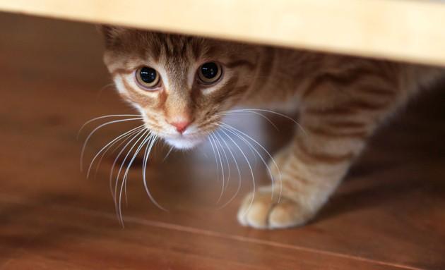 Mon chat a peur des feux d'artifice, que faire ?