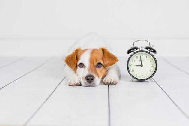 changement d'heure chien