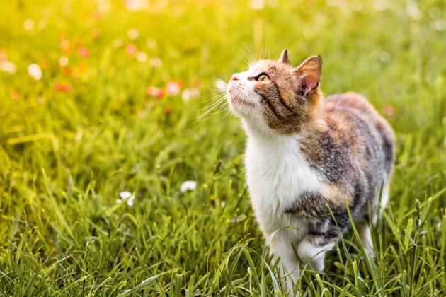 Rage chez le chat : un chat mordu par une chauve-souris enragée en France