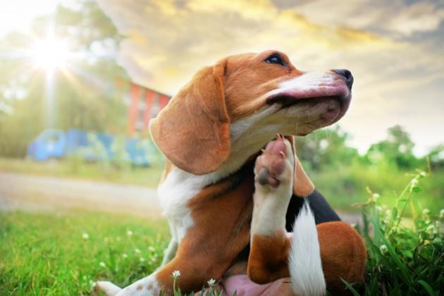 Vacances d'été : 9 dangers qui menacent vos chiens et chats pendant la période estivale