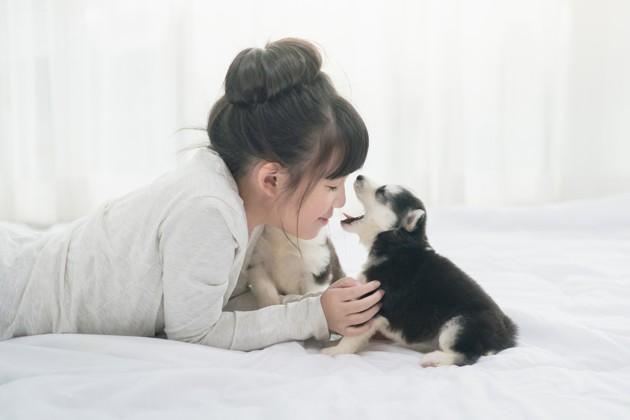 Mauvaise haleine du chien : les réponses d'un vétérinaire pour mieux la comprendre et la combattre