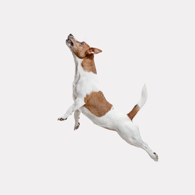 Pourquoi chaque jour, à la même heure, mon animal se met à courir soudainement dans tous les sens ?