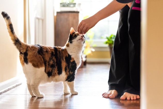 Comment récompenser son chat ?