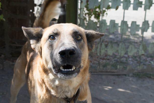 Morsures de chien : on fait le point avec une vétérinaire !