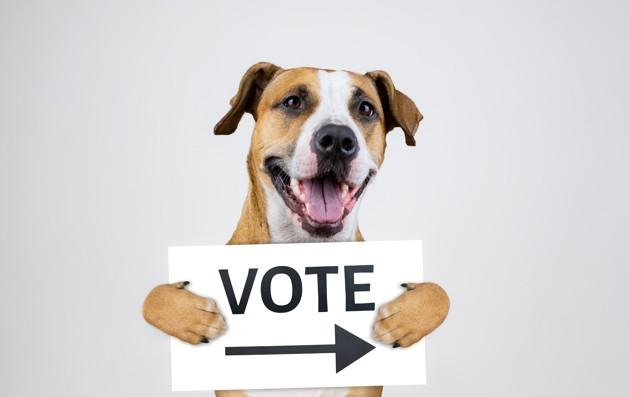 Election des membres du Conseil d'Administration de la SPA 2019 : tout ce qu'il faut savoir !