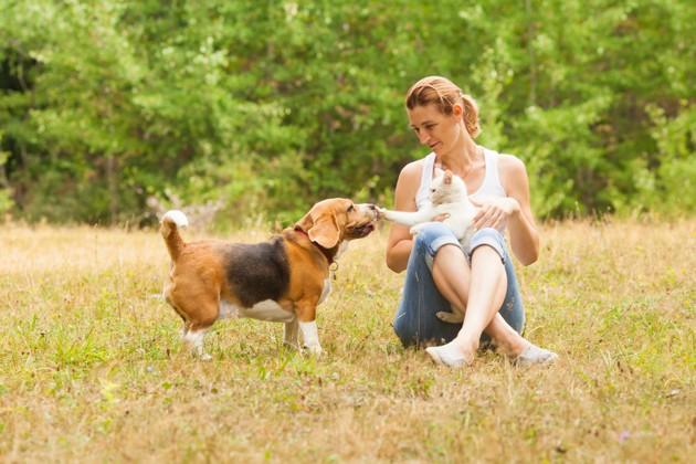 Covid-19 et refuges pour animaux : vers plus d'adoptions et moins d'abandons cet été ?