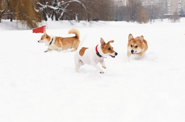 chien dans la neige à Noël