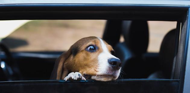 Coup de chaleur du chien : attention pendant les vacances d'été !