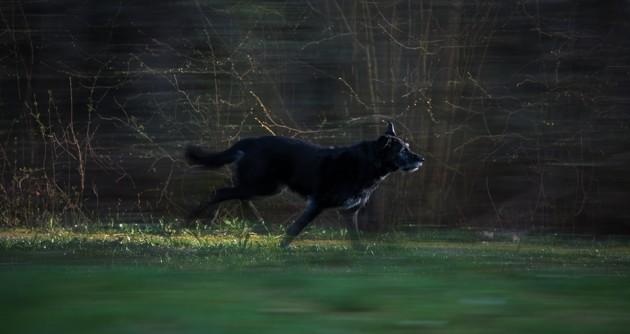 un chien peureux qui fuit les feux d'artirice