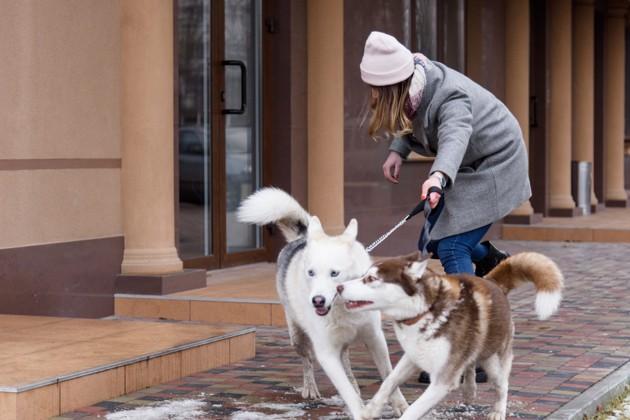 Comment promener deux chiens en même temps ?