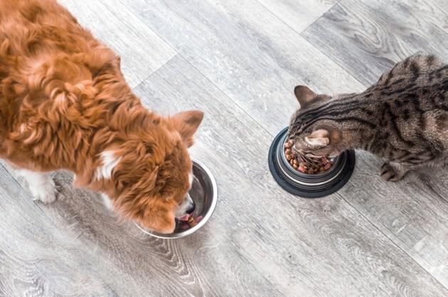 Croquettes sans céréales : quels bienfaits pour votre animal ?