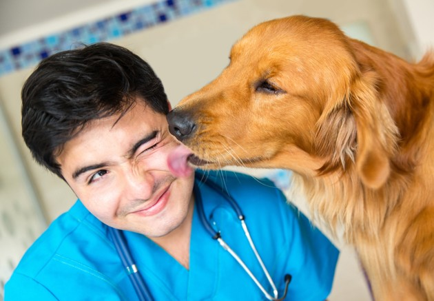 Des influenceurs canins se retirent d'Instagram pour sensibiliser aux suicides de vétérinaires