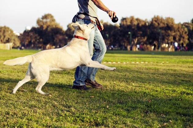 Adoptions, toilettage, vétérinaires… tout ce que change le déconfinement pour les propriétaires de chiens et chats
