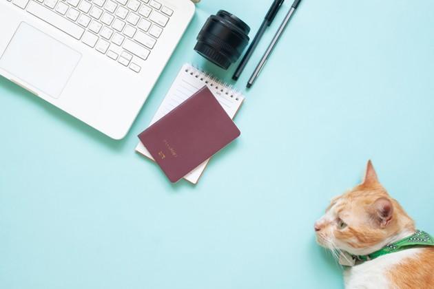 passeport chat