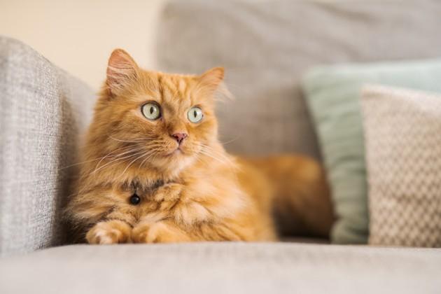 Tout savoir sur l'allergie au chat