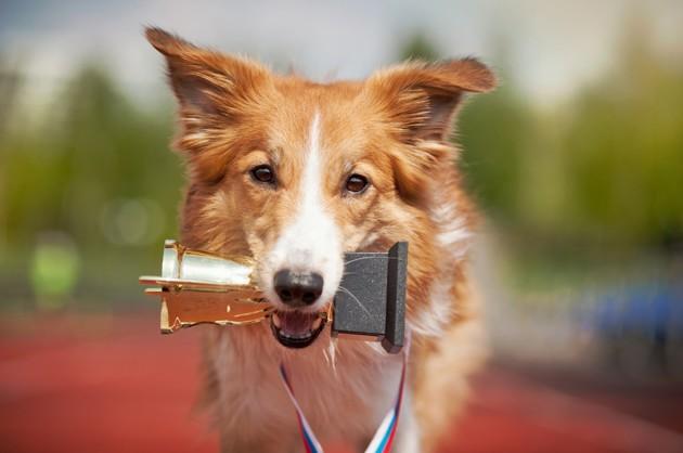 Salon de l'agriculture 2020 : un nombre record de chiens de race va envahir le salon !