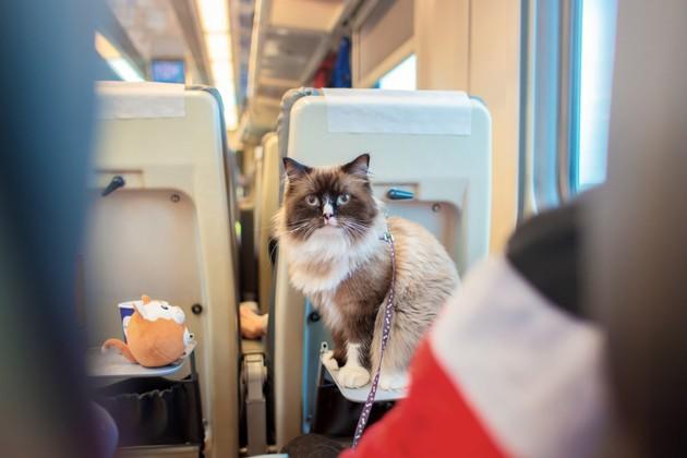 Metro, RER, bus, tram, TGV, Eurostar ou Thalys : dans quels cas peut-on prendre les transports en commun avec son chien ou chat ?