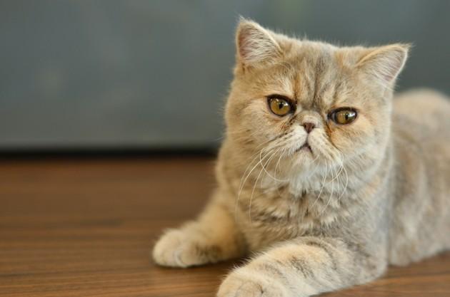 Rentrée 2020 : quels sont les signes d'anxiété à surveiller chez le chat ?