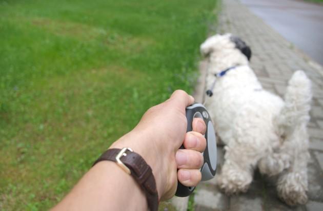 Coronavirus : en Espagne, on fait preuve de créativité pour « promener son chien » pendant le confinement