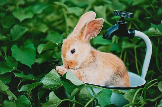 10 choses absolument fascinantes que vous ne saviez pas sur les lapins !