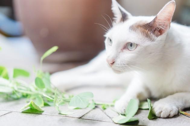 Quelles plantes pour son chat peut-on mettre dans son jardin ?