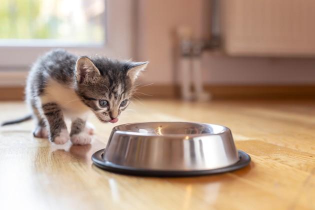 chaton qui s'approche d'une gamelle