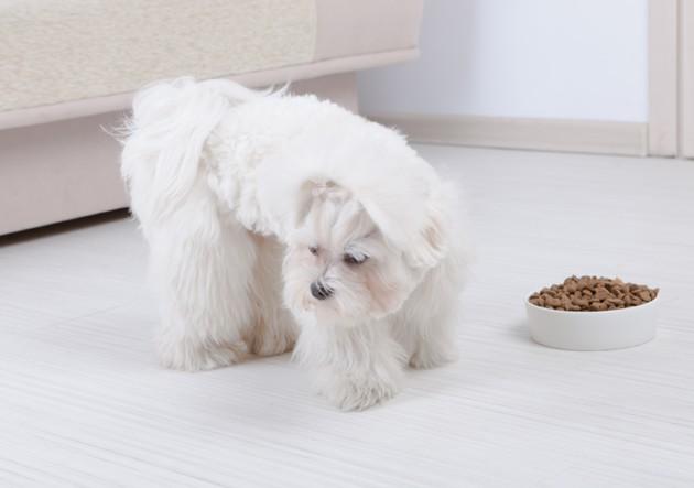 Mon chien perd trop de poids : pourquoi, et que faire ?
