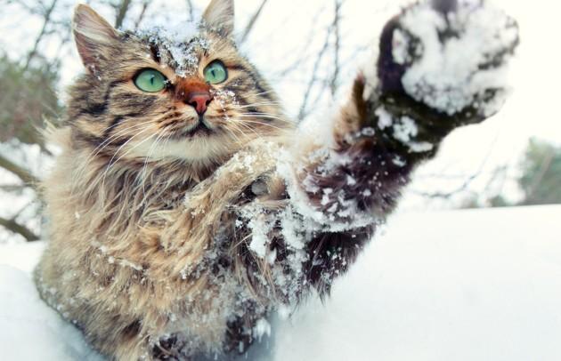 chat qui joue avec la neige en hiver