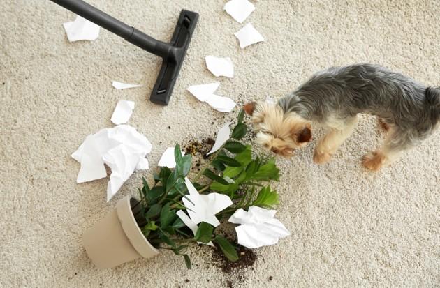 6 choses à faire pour sécuriser la maison pour son chien