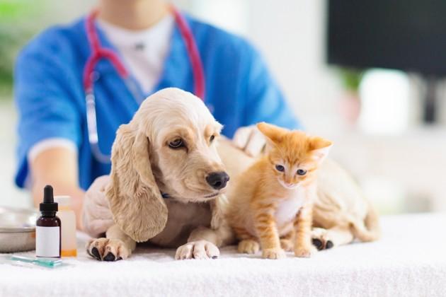 Ecole nationale vétérinaire : comment entrer directement après le bac via Parcoursup ?