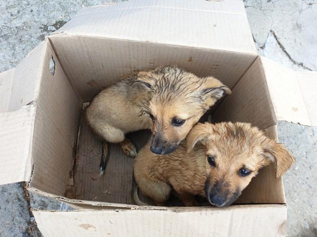 Chiots négligés dans un carton