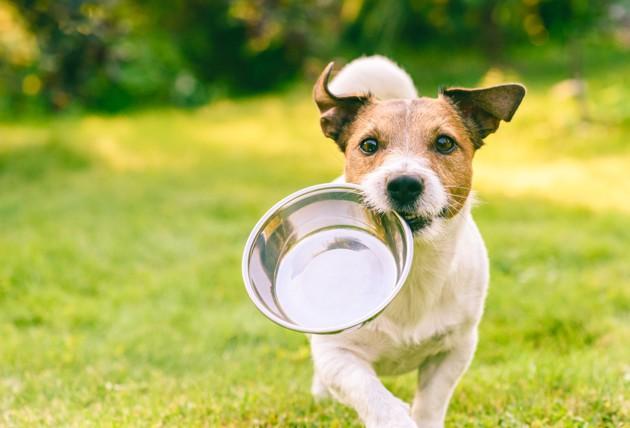 Quels sont les bienfaits de l'alimentation bio pour nourrir les chiens et chats ?