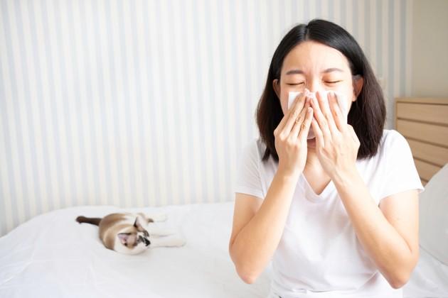 Allergie au chat : 4 symptômes à surveiller