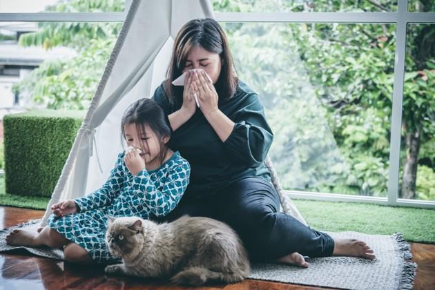 Sondage exclusif - 1 propriétaire de chat sur 2 est concerné par l'allergie aux chats !