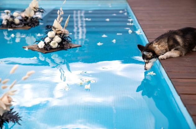 Mon chat ou chien peut-il boire l'eau de la piscine ?