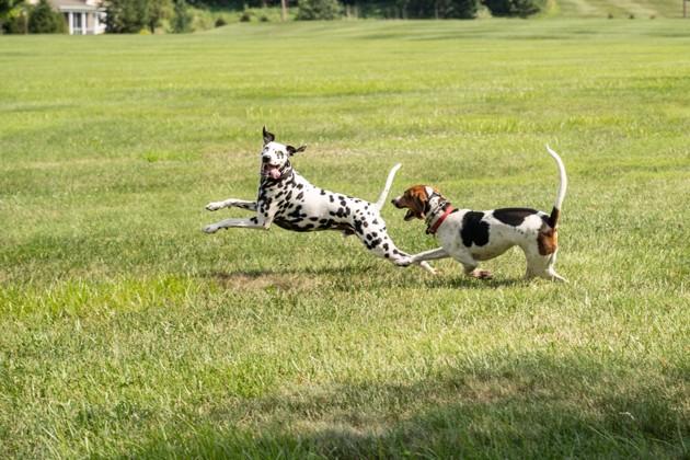 Comment bien promener son chien sans laisse ?